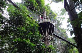 Kinabalu-park