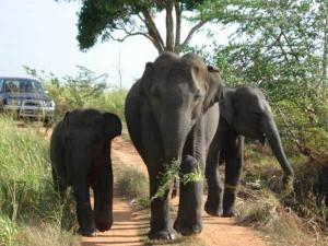 Sri-Lanka-Wilpattu-National-Park-300x225