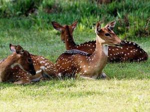 Sri-Lanka-Wilpattu-National-Park3-300x225