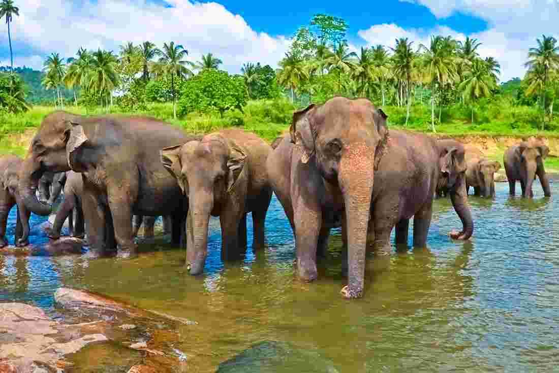 sri-lanka-elephants-bathing
