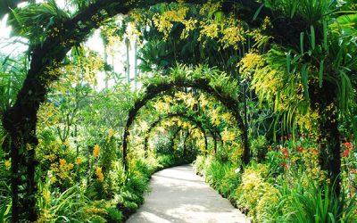 Singapore-Botanic